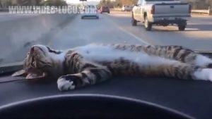 Kucing Lucu Yang Lebih Mesra Daripada Pacarmu